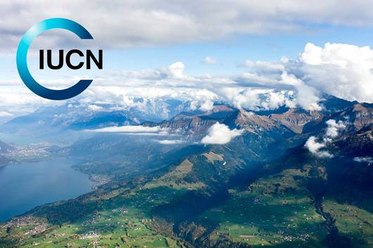 Logo de l'UICN (Union internationale pour la conservation de la nature)