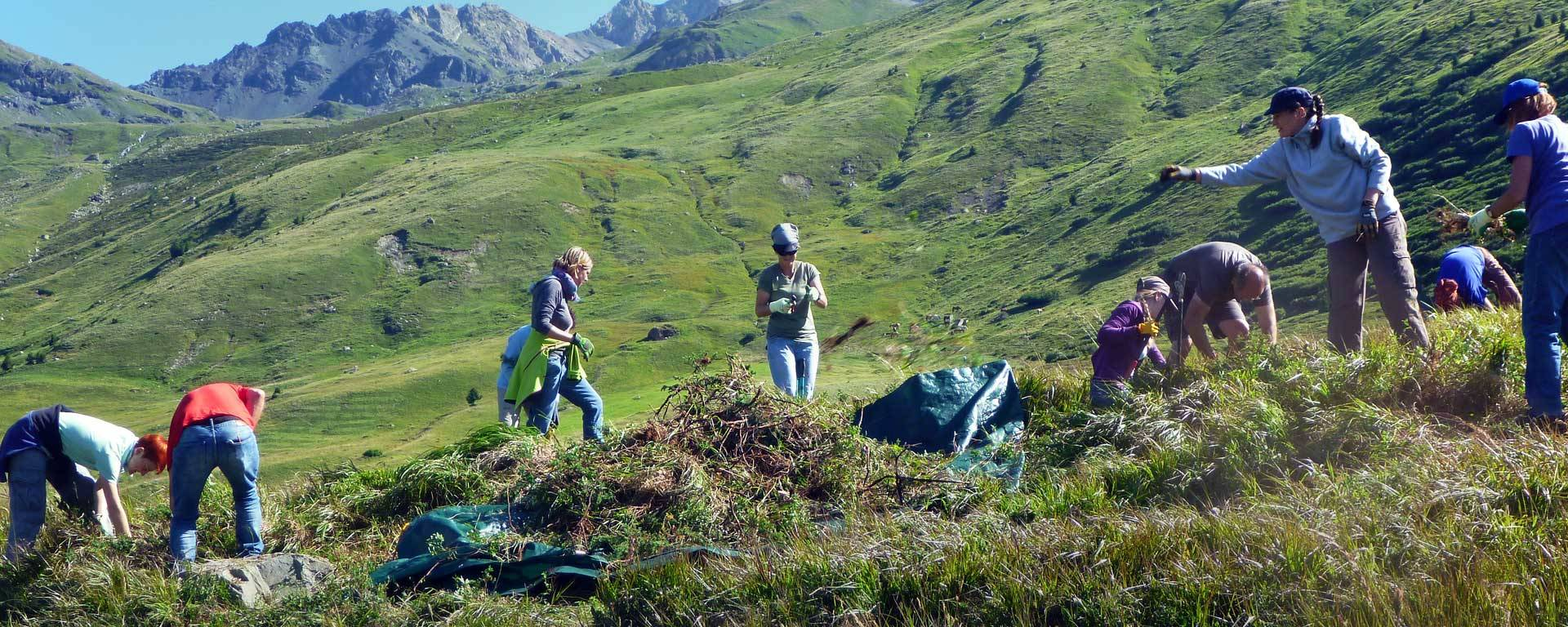 Volunteers working with gloves and shears in a field in Alp Flix © Monika Wernli